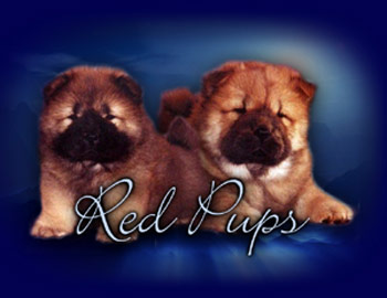 Forestway Chows - Breeder in Michigan. Chow puppies for sale in Forestway